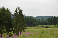 boswandeling-sauerland